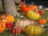 pumpkins-glass