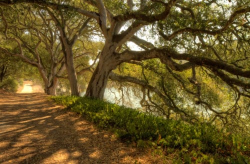 elkhorn-slough-path