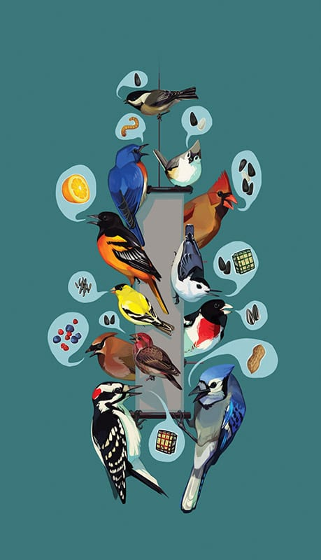 birds-feeder