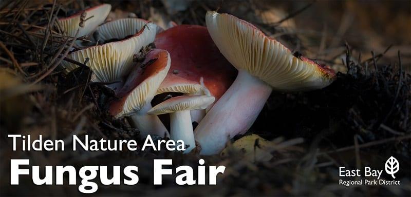 tilden-fungus-fair-webinar