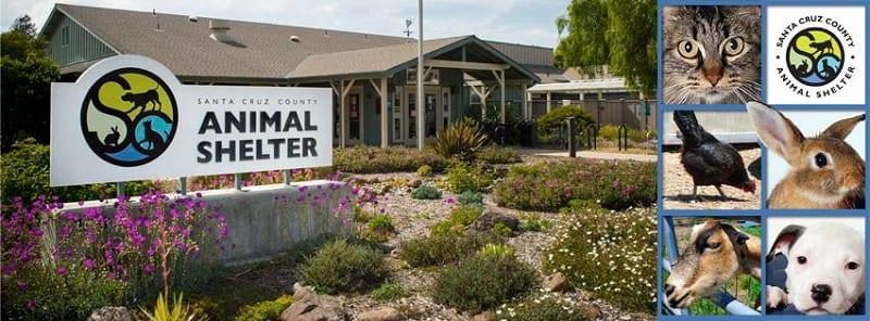 scc-animal-shelter
