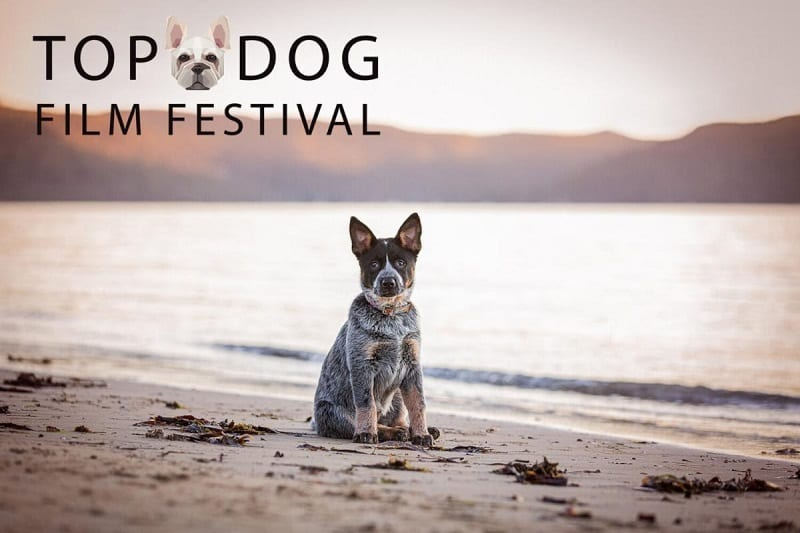 rio-top-dog