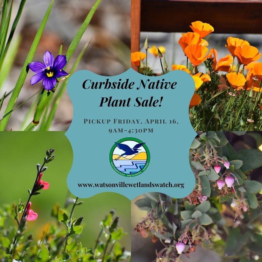 watsonville-wetlands-plant-sale