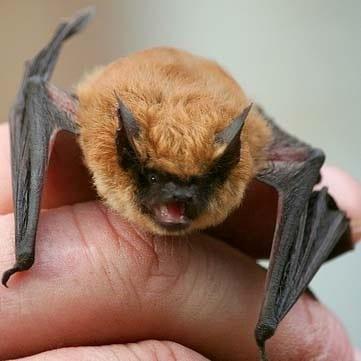 library-bats