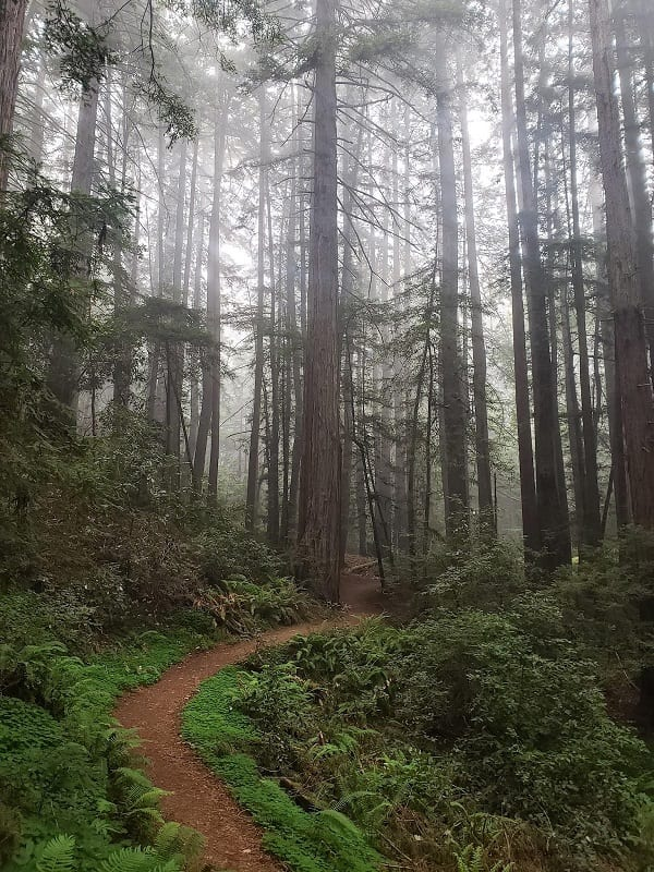 parks-fog-belt